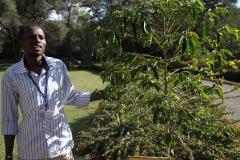 Vår guide Patrick forteller. Her ved kaffeplanten. Foto: Siri Wolland