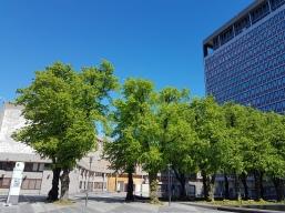 Høyblokka og Y-blokka idag. Inspirert av FN bygningen i New York og UNESCO bygningen i Paris. Foto: Siri Wolland