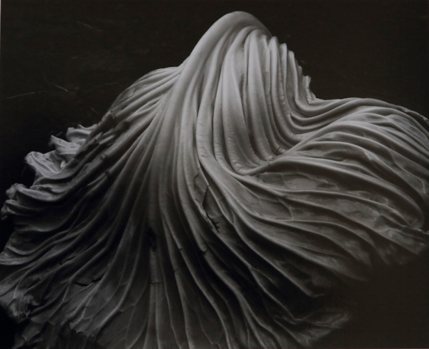 Foto: Edward Weston. Cabbage Leaf. 1931. Cabbage-Leaf-1931-39V. http://edward-weston.com/