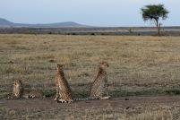 Masai Mara, Kenya. Foto: Siri Wolland
