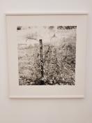 Dag Alveng, Gjerdestolpe, 1987. Foto fra utstillingen: Siri Wolland