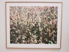 Dag Alveng, Sibirkornell i høstfarger, 2014. Foto fra utstillingen: Siri Wolland