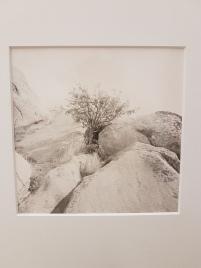 Dag Alveng, Lite tre, Hvasser, 2012. Foto fra utstillingen: Siri Wolland