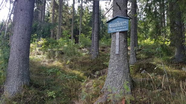 Plassen Pina ved Sognsvann. Foto: Siri Wolland.
